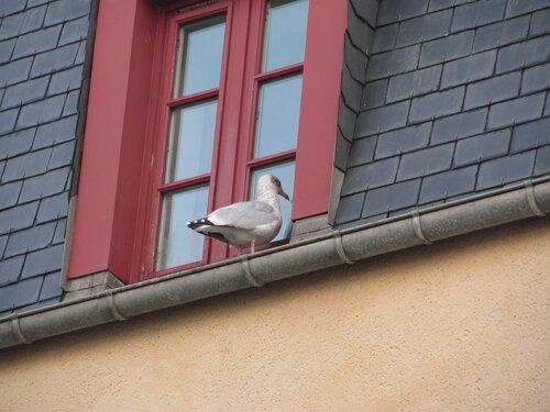 Подглядываю в окно а там такое фото 233-492