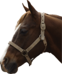 horse_2014 (22).png