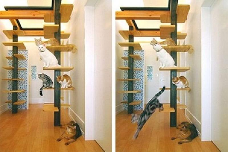 Фото как сделать уголок для кошек
