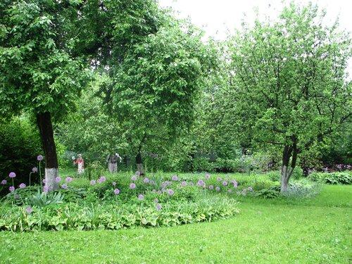 Сад во время дождя