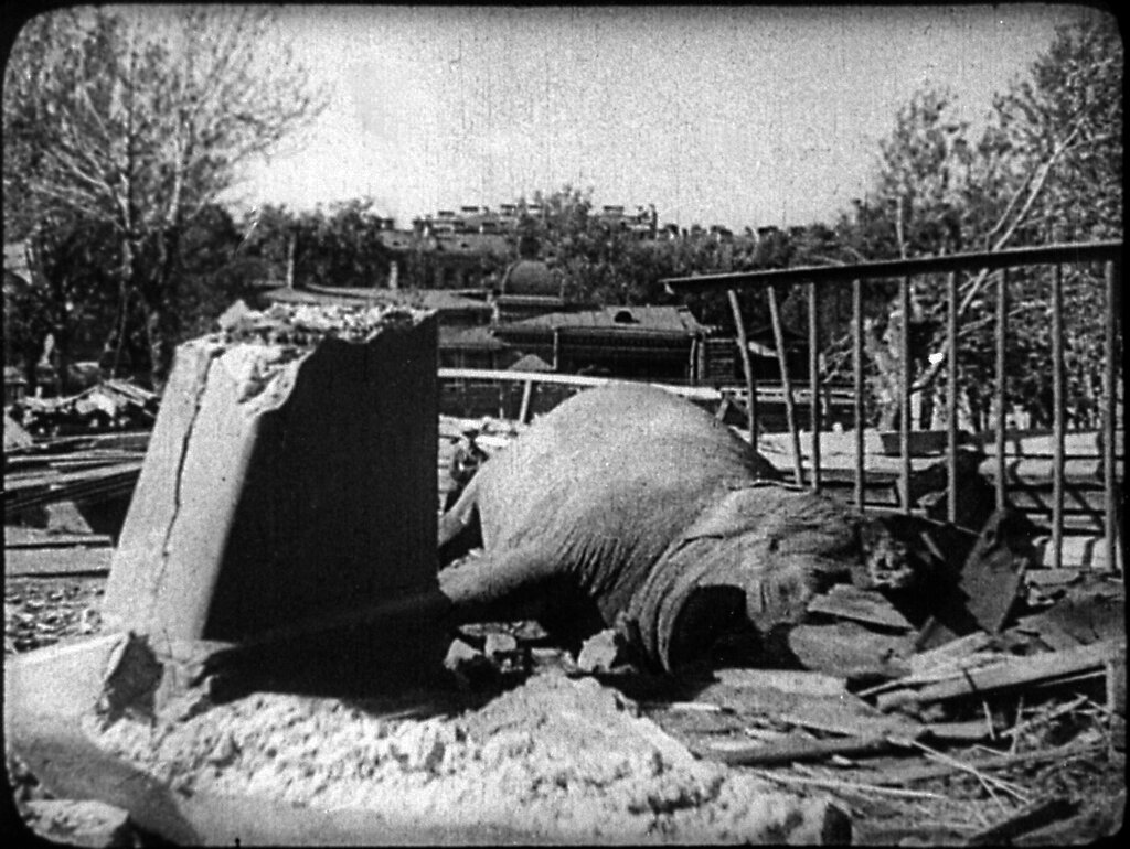Ленинградский зоосад, блокада
