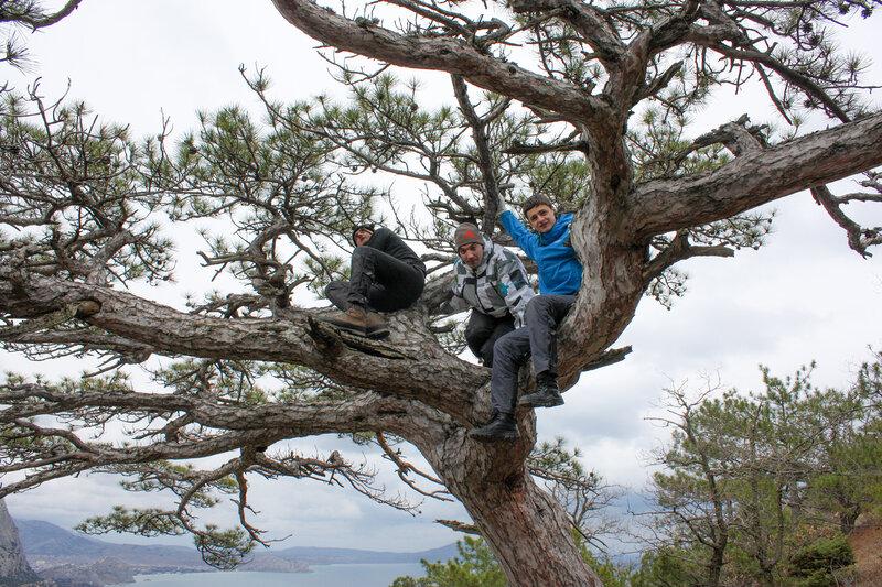 Залезли на дерево