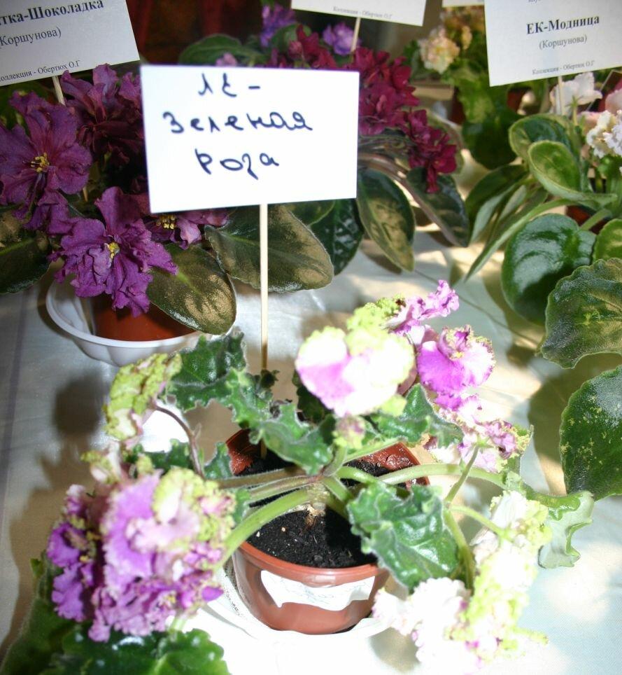 Запорожцы могут увидеть «Зелёную розу» и растение из самого жаркого места планеты (ФОТО), фото-5