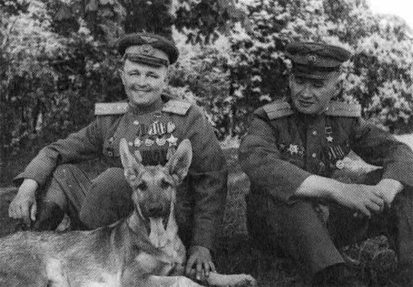 jurashz.livejournal.com, ВОВ, WW2, Вторая мировая, служебные собаки, война, армия, оружие, история, СССР