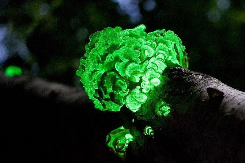 самые красивые грибы