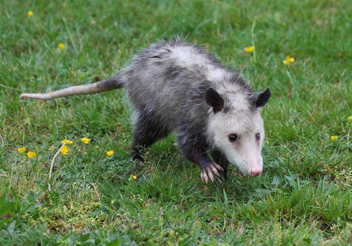 Какие животные самые хитрые на планете