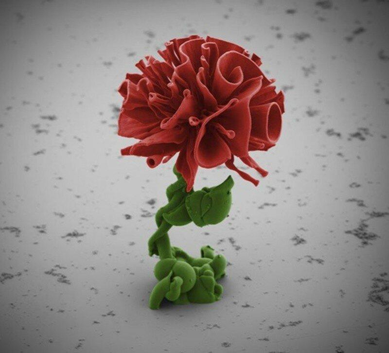 Микроскопические цветы из Гарварда