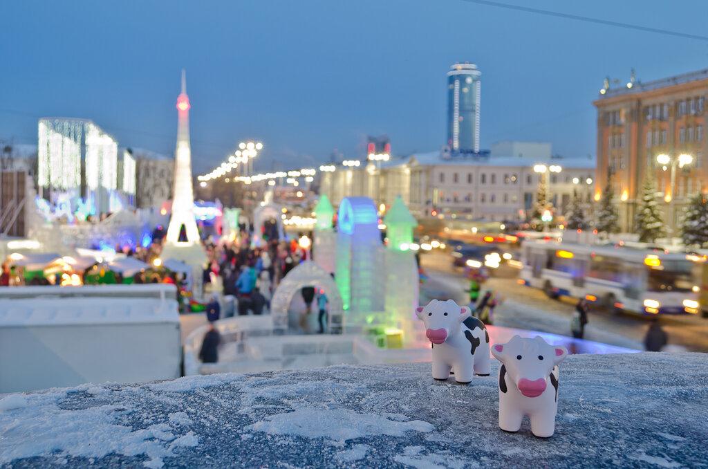 Снежные коровы на Ледовом городке в Екатеринбурге. Фото снято на Nikon D5100 KIT 18-55 VR