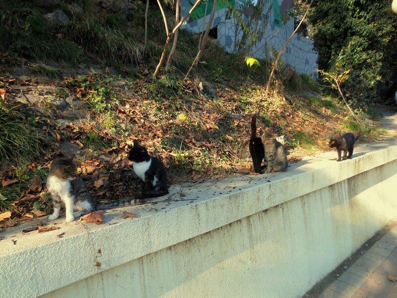 Кошачья банда