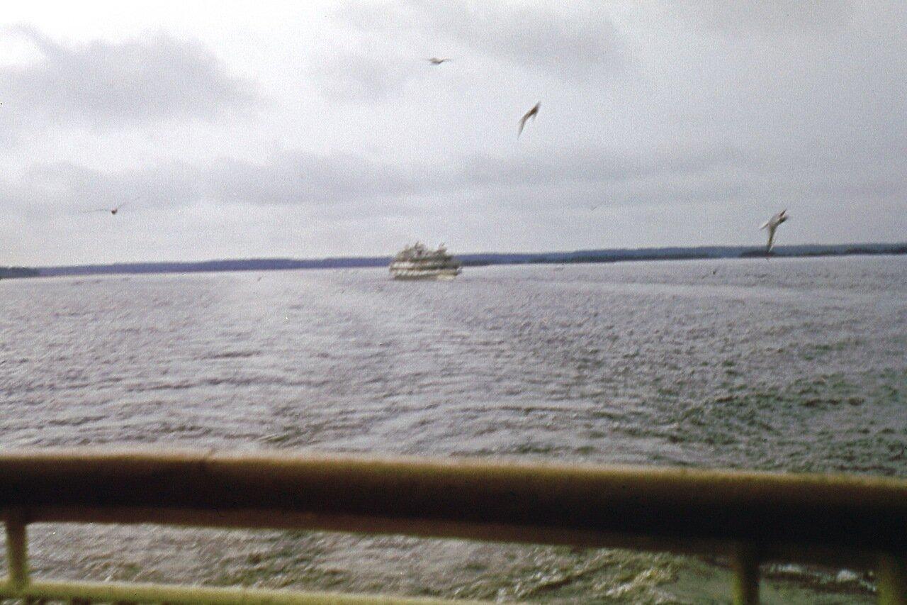 Чайки. Волга. 1971