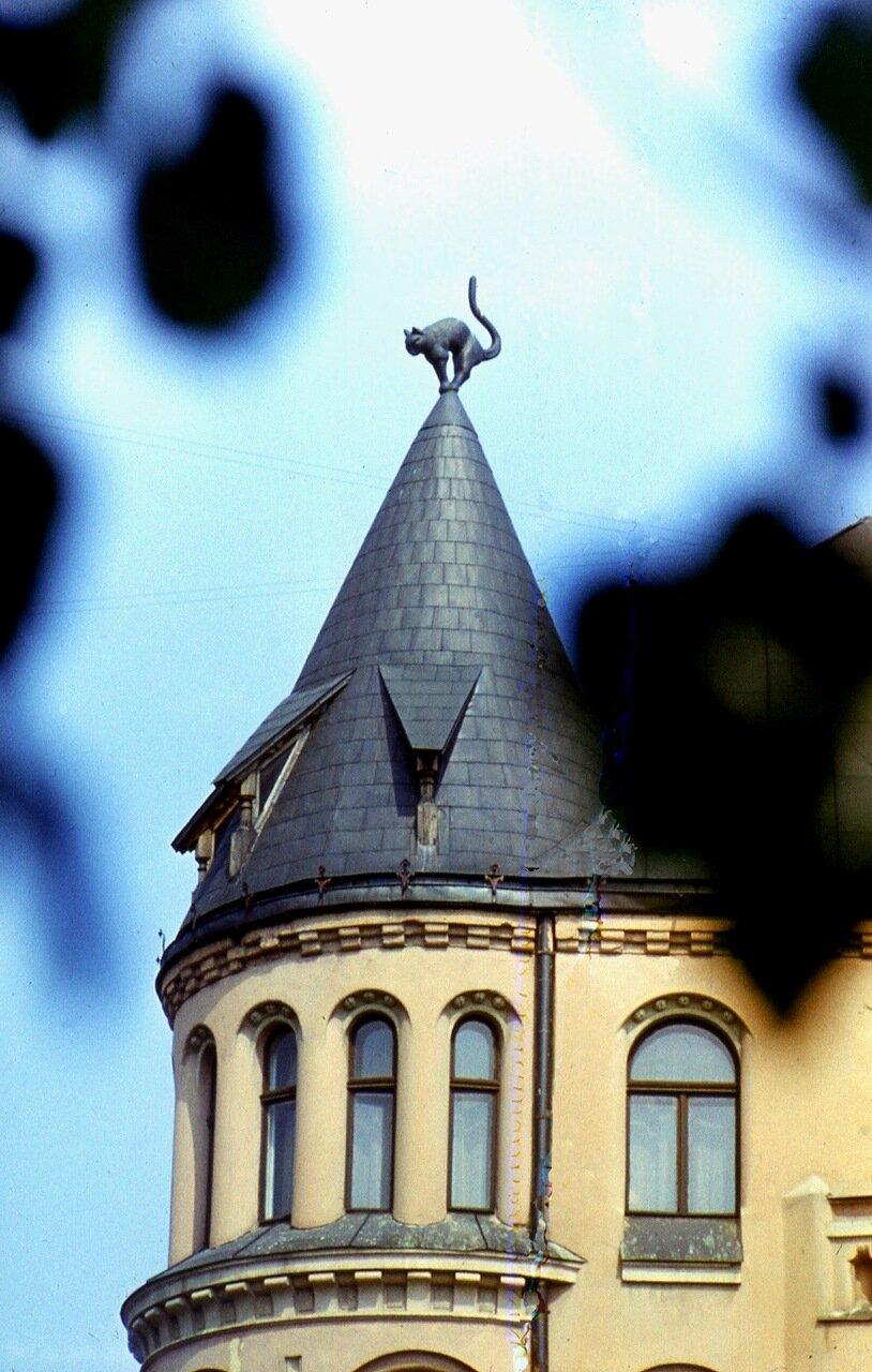 7. Кот  на  крыше