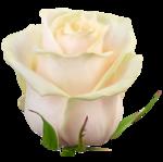 adika_flower_symphony_el (40).png