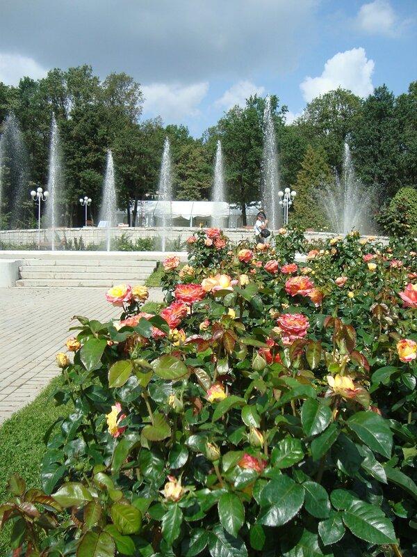 Пейзаж с розами. Ботанический сад. Москва