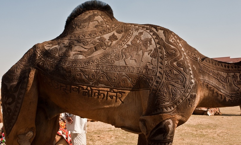 Верблюжий тюнинг