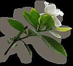 http://img-fotki.yandex.ru/get/9328/97761520.cd/0_7fb8d_ddb0307b_orig.png