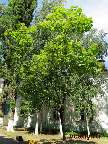 трубное дерево