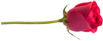 RR_MemoriesOfMom_RoseGarden_Element (53).png