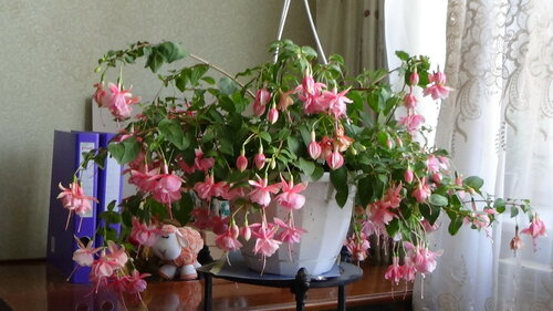 Сад и огород: Флудилка: Цветоводы, ау! Нужон консультэйшн))