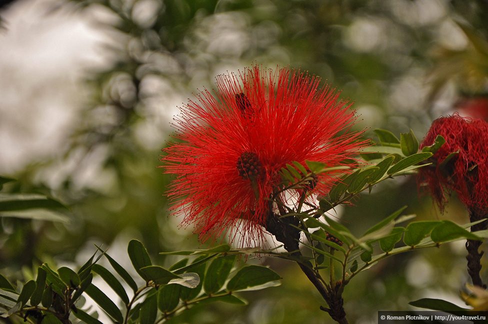 0 168b32 606da335 orig День 192 200. Хардин Ботанико, прощальная вечеринка на крыше в Медельине и перелет в Боготу