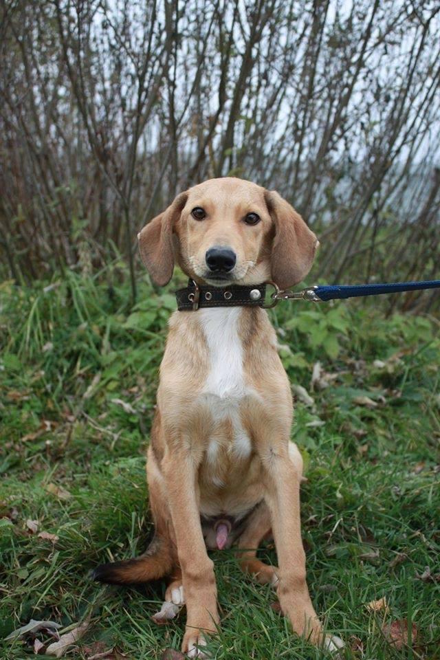 Уши собака из приюта догпорт