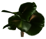 Palms  (42).png