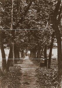 Деревья на аллее 2-й роты корпуса.