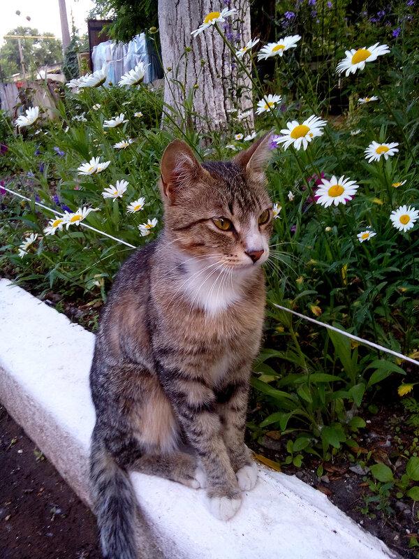 Кот на бордюре.jpg