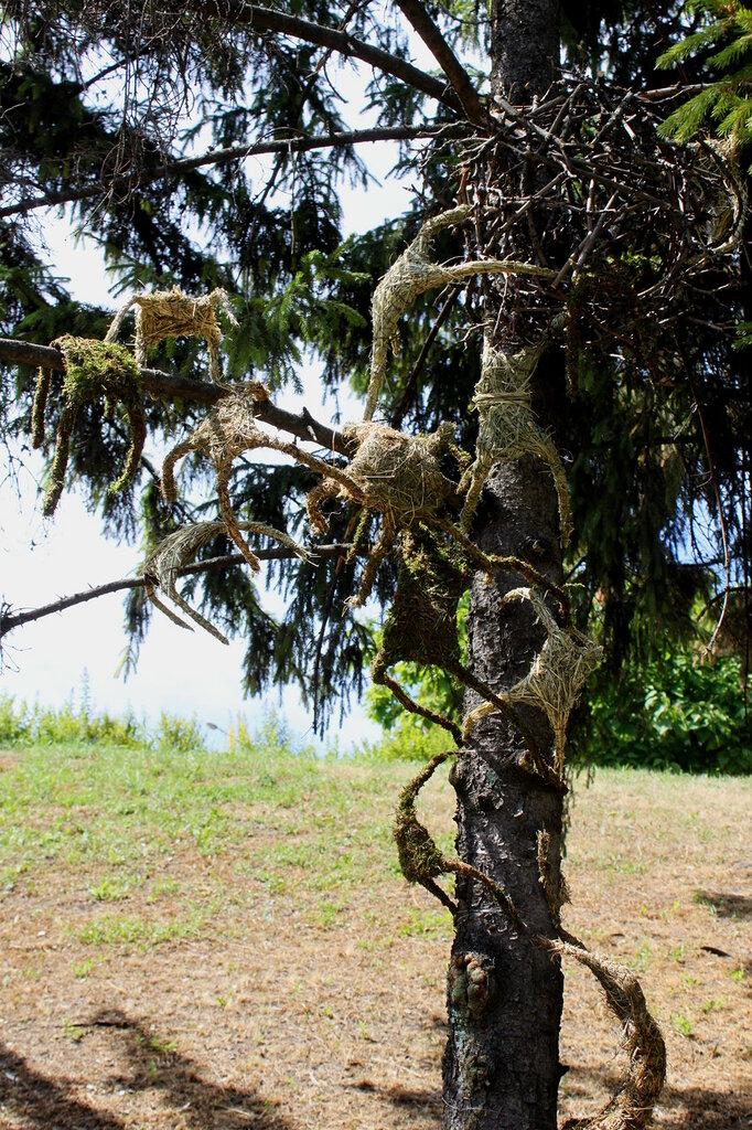 Пауки на дереве