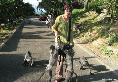 Холм с обезьянками в Куала Селангор