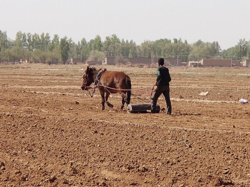 валик для выравнивания и трамбования почвы после посева семян