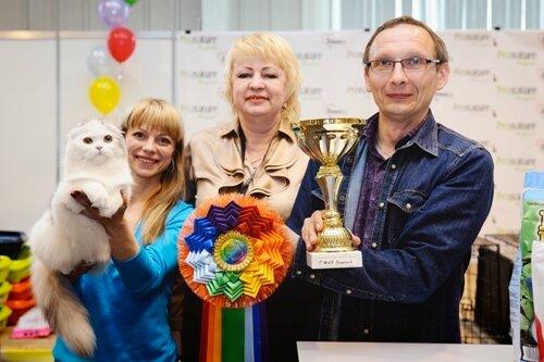 Best Total, Best Junior - 91 Kindlycat`s Palma (Female) SFL fs 22 03 Осколкова С. В. Олимпия , Томск