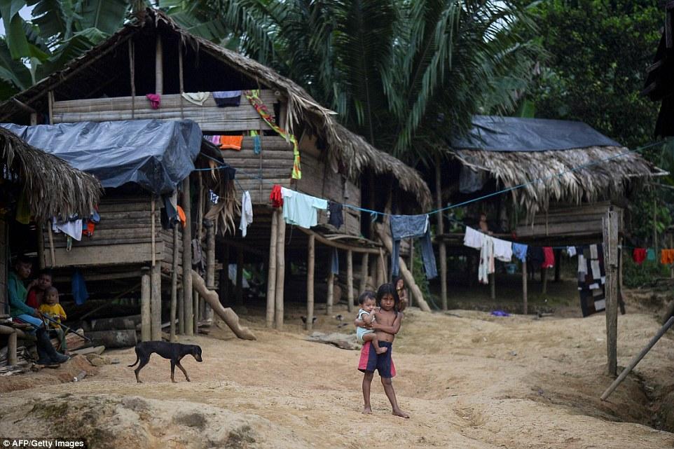 Войны за контроль над наркотрафиком вынуждают тысячи колумбийских семей голодать
