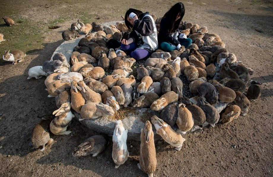 Места, где животные чувствуют себя главнее людей