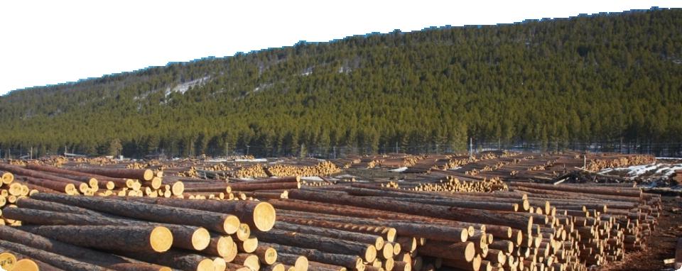 Лесозаготовительное предприятие NWForest предлагает купить вологодский лес