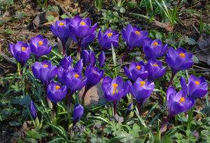 Весна в аптекарском