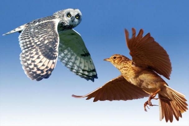 Редким совам удаётся составить расписание, которое бы сочеталось с привычкой засиживаться допоздна и