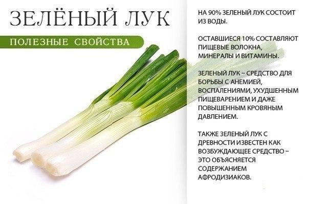Что полезного в зелени?