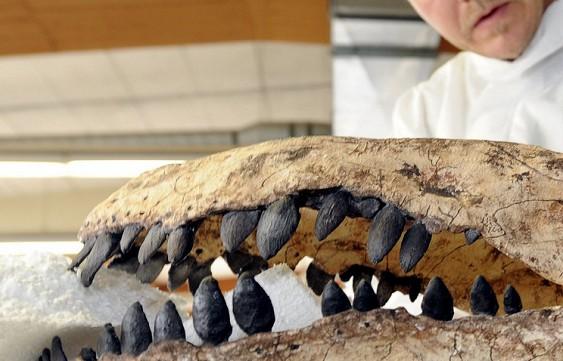 Ученые открыли два новых вида ихтиозавра