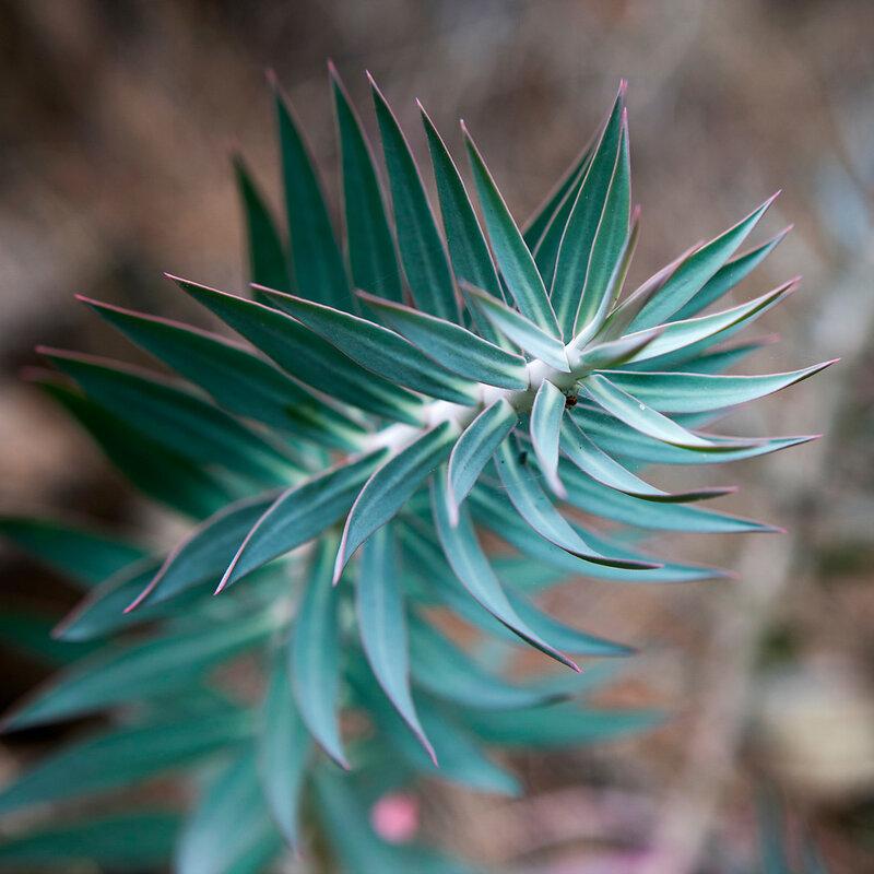 Succulent Cactus Plant In Garden