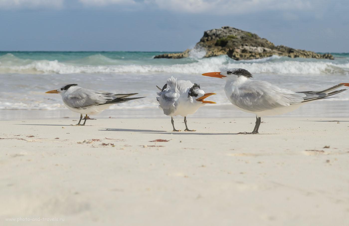 20. Мексика. Пляж в поселке Тулум (Tulum). Отзывы туристов об отдыхе. 1/1000, 9, 55, 100.