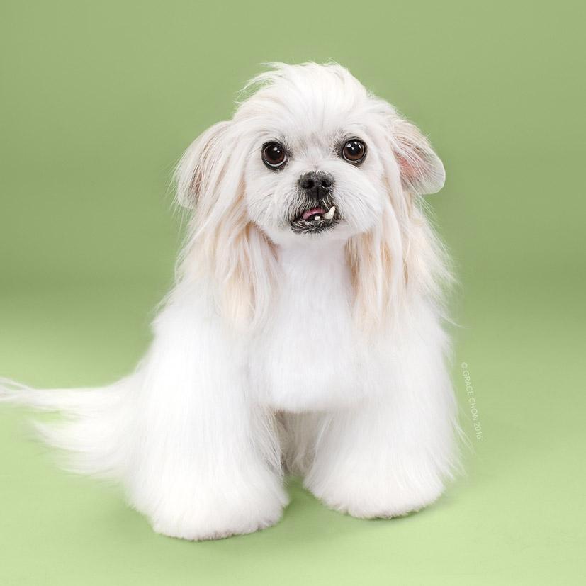 Grace Chon - Hairy - Lana после посещения парикмахера