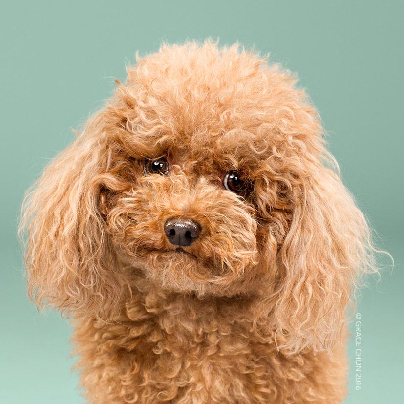 Grace Chon - Hairy - BiggieSmalls до визита к парикмахеру