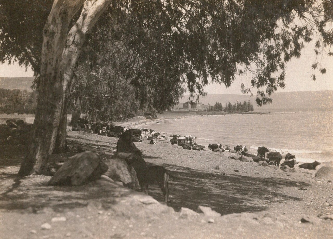 Табха. Галилейское море. Район церкви Умножения Хлебов и Рыб