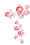 sekada_totheflowers_element(17).png