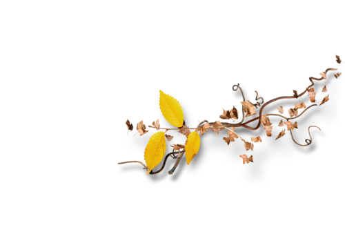 Palvinka_AutumnSplendor_cluster2d.png