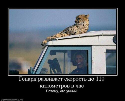 http://img-fotki.yandex.ru/get/9346/1089349.2/0_a84e2_ddae2dae_L.jpg