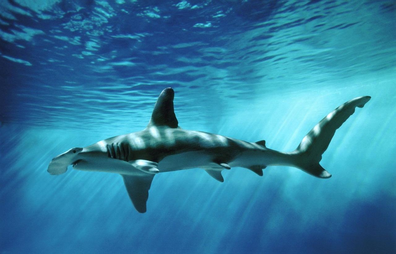 Секс у акул 6 фотография