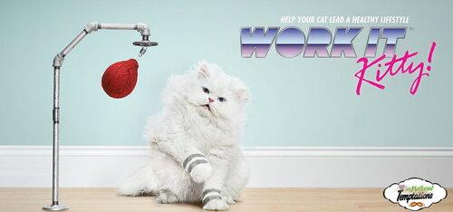 Спортивные мурлыки демонстрируют кошачий фитнесс в рекламе Temptations Cat Treats