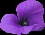 NLD Poppy (4).png