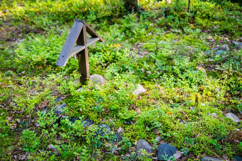 3. Быстрое изучение местности позволило понять, что тут кто-то похоронен. Я видел детские могилки и